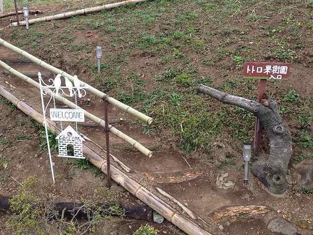 トトロ果樹園登り口.jpg
