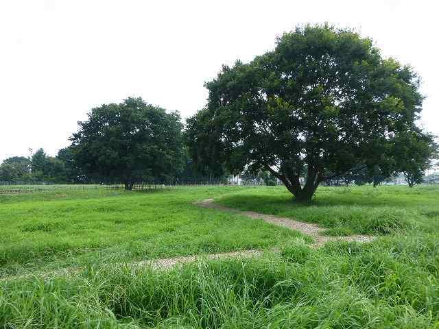 公園を見渡す1.jpg