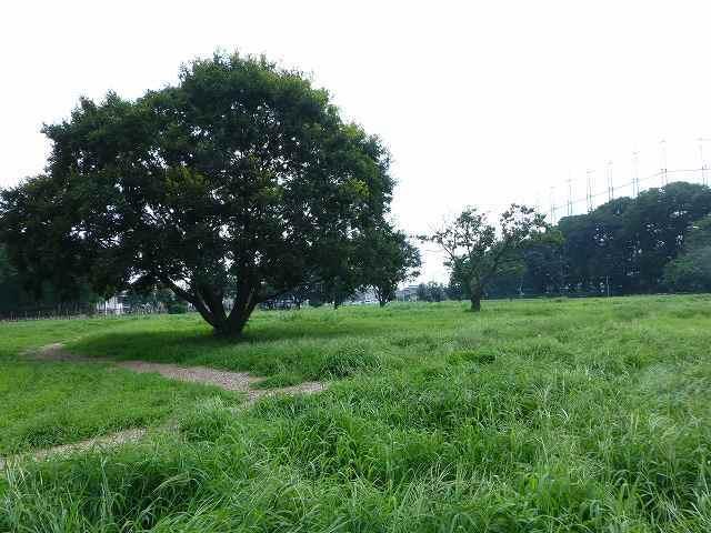 公園を見渡す2.jpg