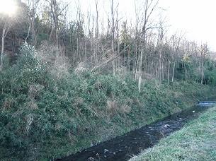 冬枯の里見丘陵2.jpg