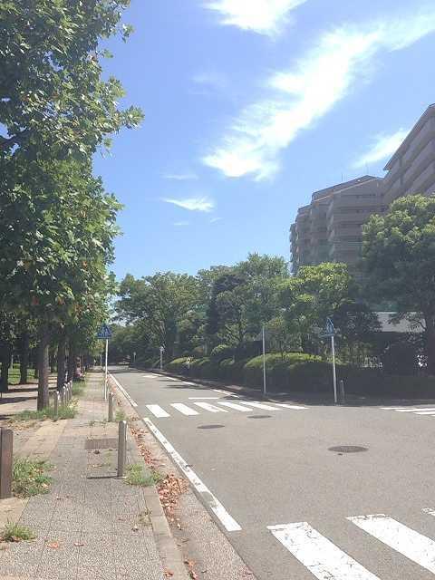 夏の大将道1.jpg
