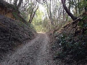 山道2.jpg