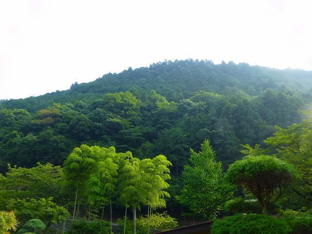 峯方面の山1.jpg