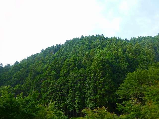 峯方面の山2.jpg