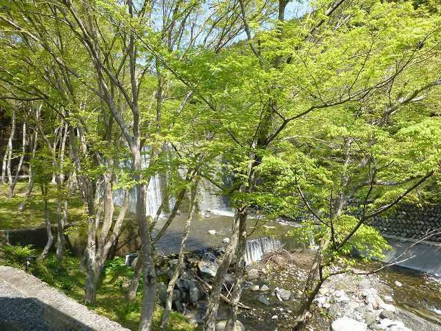 新緑の堰堤.jpg