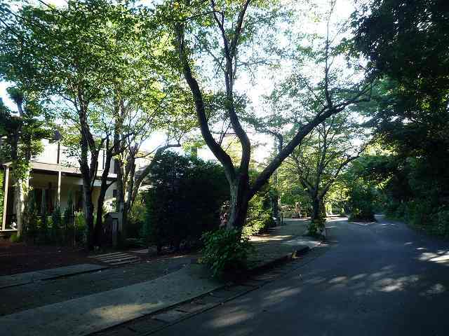 朝のさらの木の前の道.jpg
