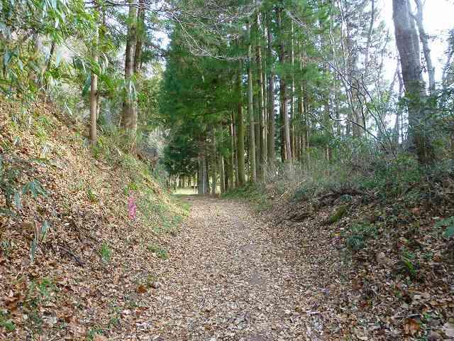 林道3.jpg