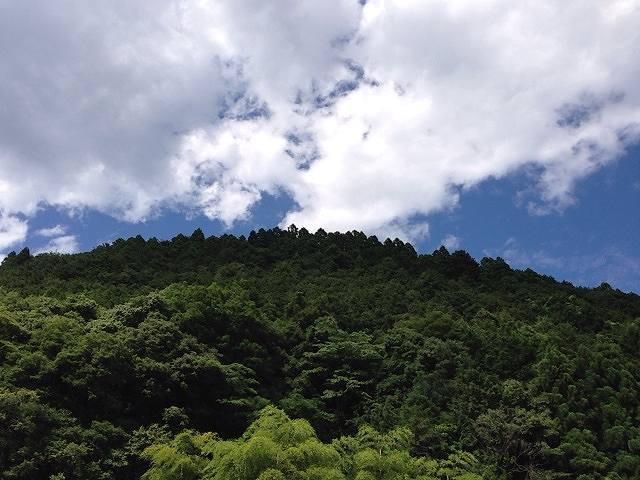緑と青と白.jpg