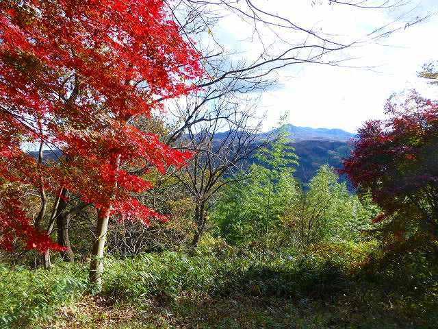 秋の風景1.jpg